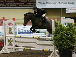 Cavan HPI Whos Little Lux Irish Pony