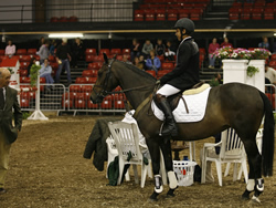 Millstreet National Pony Discovery Winner 2007